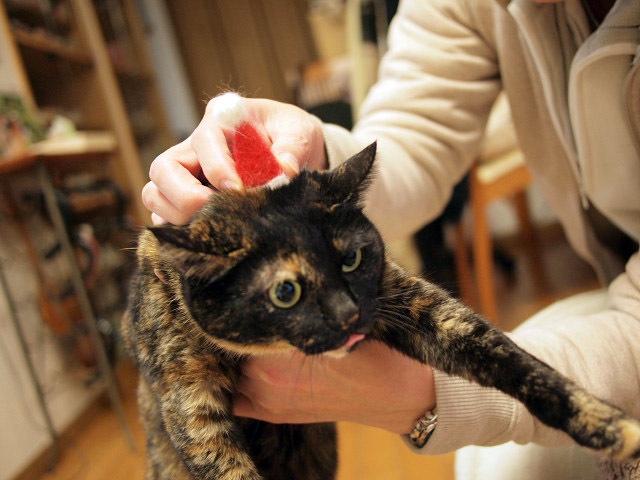 フェルトのサンタ帽と猫達_03.jpg